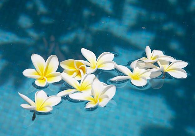 water feature, swimming pool with floating flowers