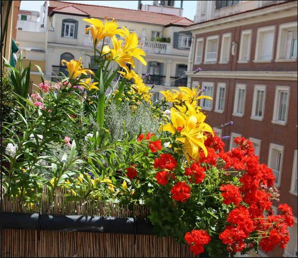 15 Tiny Outdoor Garden Ideas For The Urban Dweller: 33 Small Balcony Designs And Beautiful Ideas For