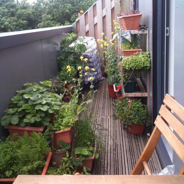 Balcony Herb Garden Ideas Small Spaces
