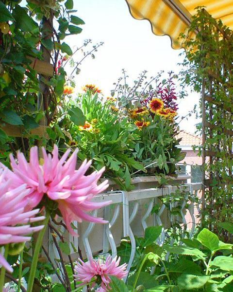 Home Decor 2012 Beautiful Home Gardens Designs Ideas