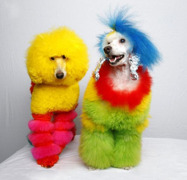 Colorful Dogs Grooming Ideas From Catherine Opson