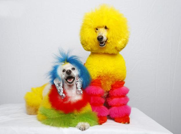 bright colors for bright dogs grooming