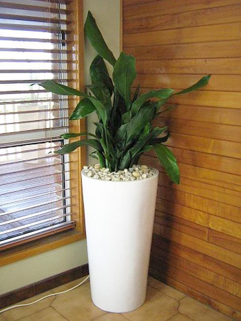 Green ideas for your home interiors decorating with - Indoor plant decor ideas ...