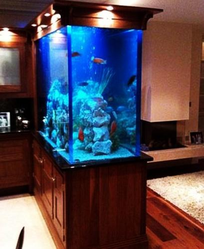 Spectacular Aquariums Personalizing Interior Design With