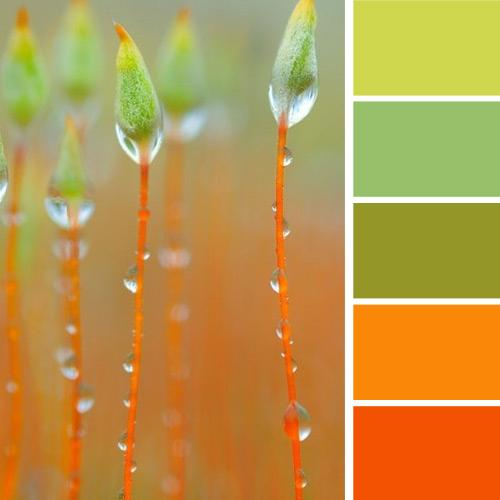 Light Green And Orange Color Scheme