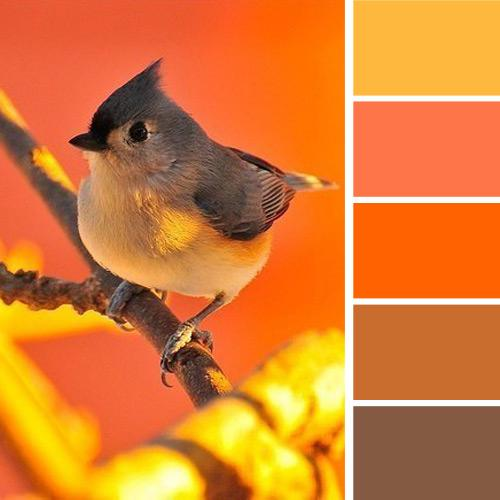 Warm And Cheerful Yellow Orange Colors Combined With Brown Color Shades