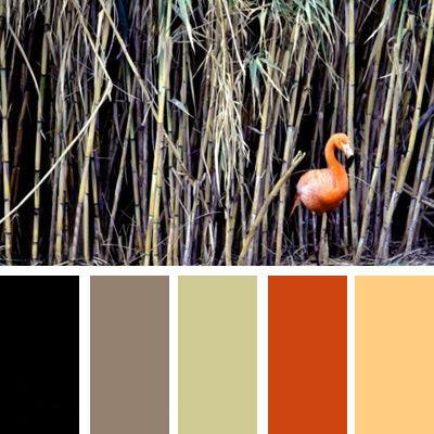 Black Pastel Green And Orange Color Schemes For Modern Interior Decorating With Bright Contrasts