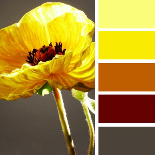 Warm Orange Color Scheme With Sunny Yellow And Dark Brown