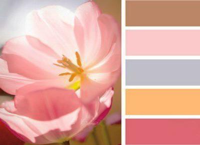 Brown Colors Soft Pink And Orange Color Schemes For Interior Decorating