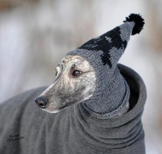 30 Knitted Hats And Sweaters For Cats And Dogs Modern Pet Design Ideas