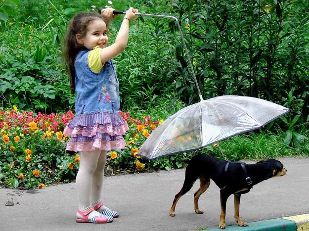 dogs umbrella, modern pet design ideas