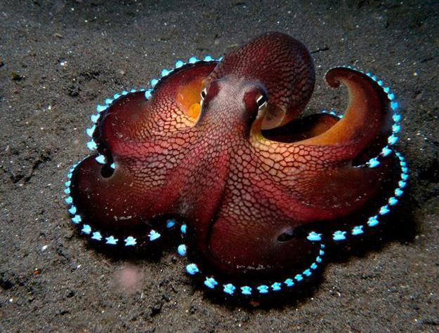 Octopus Inspirations In Modern Interior Design And Home Decor