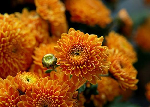 fall flowers in orange color