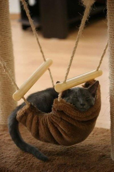 22 Cat Hammocks Giving Great Inspirations For Diy Pet