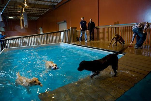 Modern Hotels For Dogs Impress With Luxurious Interior