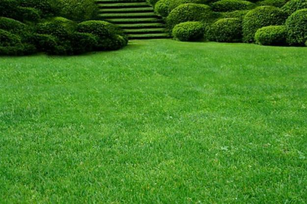 Green Grass Landscaping - Green Grass Landscaping Outdoor Goods