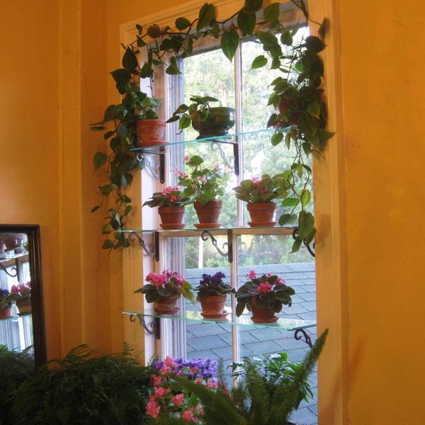Plant Wall Shelves Living Room