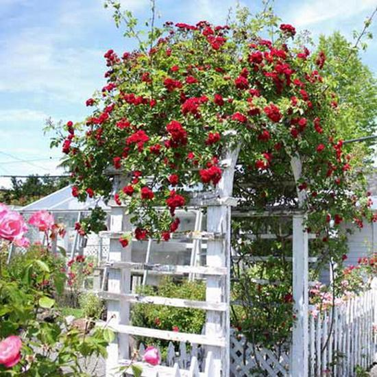 Romantic Garden Designs: 15 Beautiful Wooden Arches Creating Romantic Garden Design