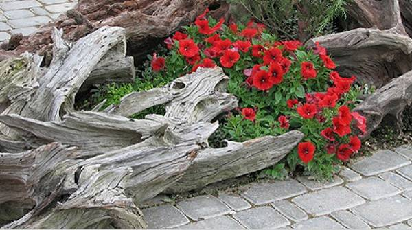 Driftwood and logs with colorful flowers, yard landscaping centerpieces and  beautiful garden design ideas - 20 Root Artworks And Yard Decorations Bringing Natural Splendor Into
