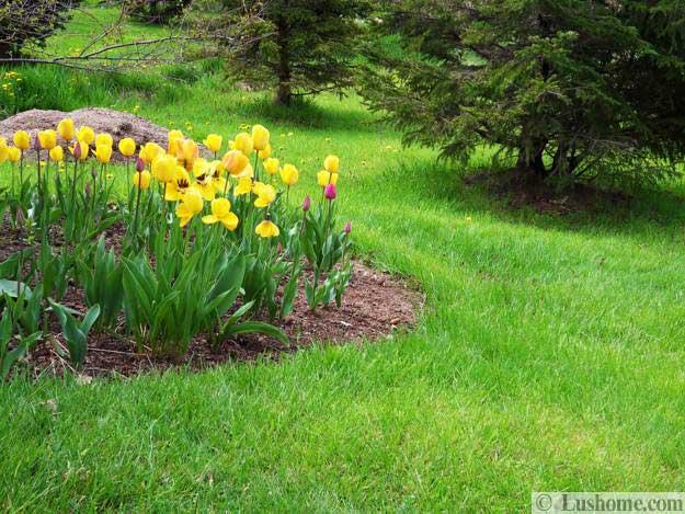 15 spring garden design ideas flower beds and evergreen plants mightylinksfo
