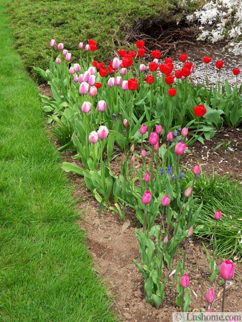 15 Spring Garden Design Ideas Flower Beds And Evergreen