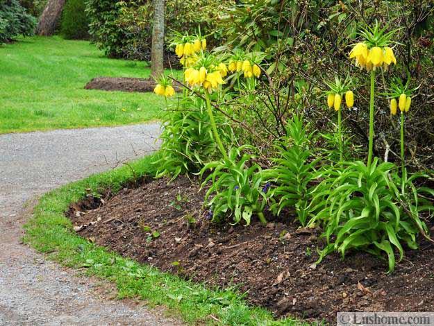 Spring garden design 25 spring flower beds and yard landscaping ideas mightylinksfo