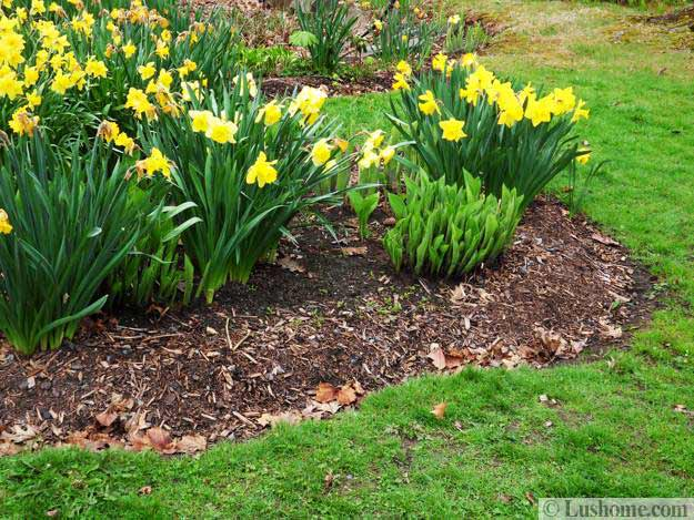 Small Yard Landscaping Designs