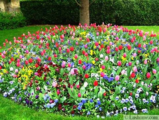 Spring garden design 25 spring flower beds and yard landscaping ideas green lawn and spring flower bed with daffodils beautiful garden design ideas mightylinksfo