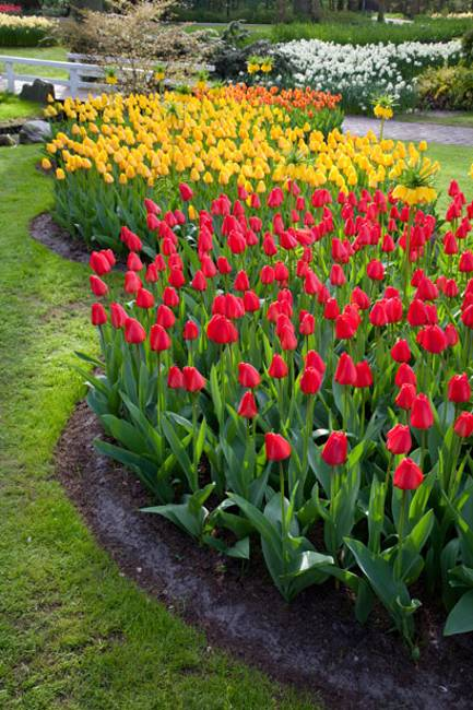 Spring Flowers and Yard Landscaping Ideas, 20 Tulip Bed ...