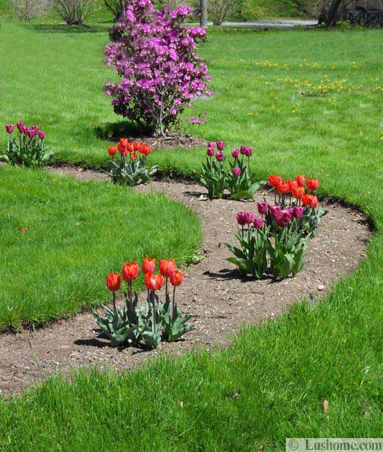 spring garden design and yard landscaping