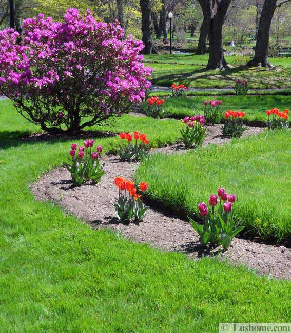Spring flowers and yard landscaping ideas 20 tulip bed for Spring garden ideas