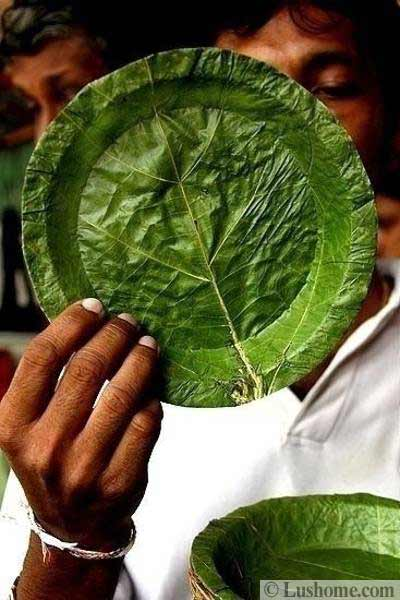 Green Leaves Inspire Eco Friendly Modern Tableware And