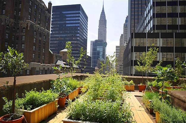 Decorative Plants And Vegetable Garden On The Roof Of The InterContinental  New York Barclay Hotel