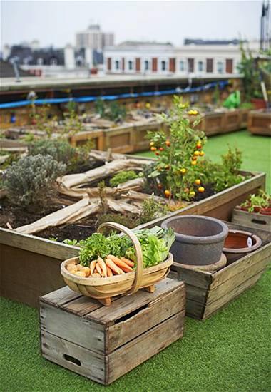 Urban Rooftop Garden Designs Changing City Architecture Green Ideas