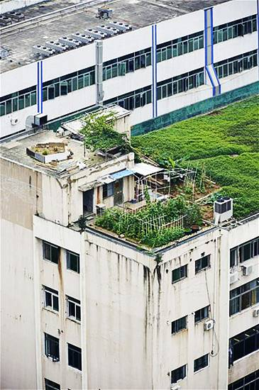 Urban Rooftop Garden Designs Changing City Architecture With