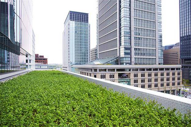 rooftop gardening and green building technology