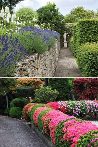 New Topiary Ideas Great Decorative Plants To