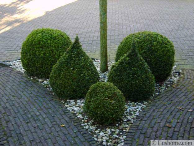 25 And 30 New Topiary Ideas Great Decorative Plants To