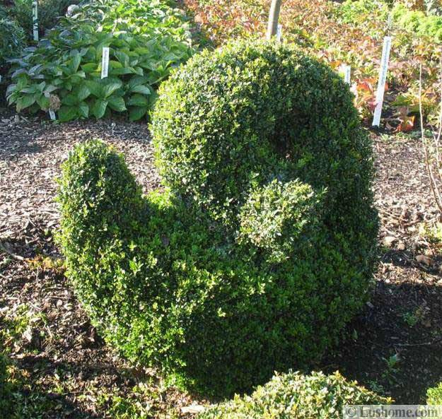 25 And 30 New Topiary Ideas, Great Decorative Plants To