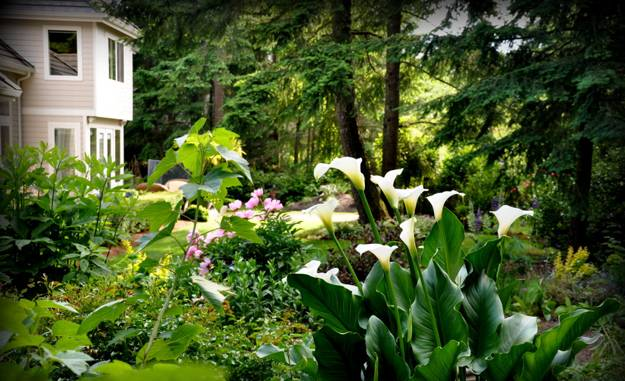 Beautiful Garden Design And Yard Landscaping Ideas Rhododendron Plants Calla Lily Flowers