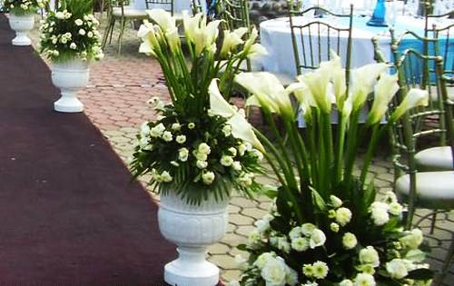 Calla Lily Flowers Add Gracious Beauty To Landscaping Ideas And Yard