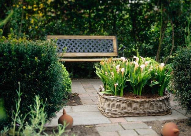 garden design with calla lilies and backyard decorating with beautiful flowers
