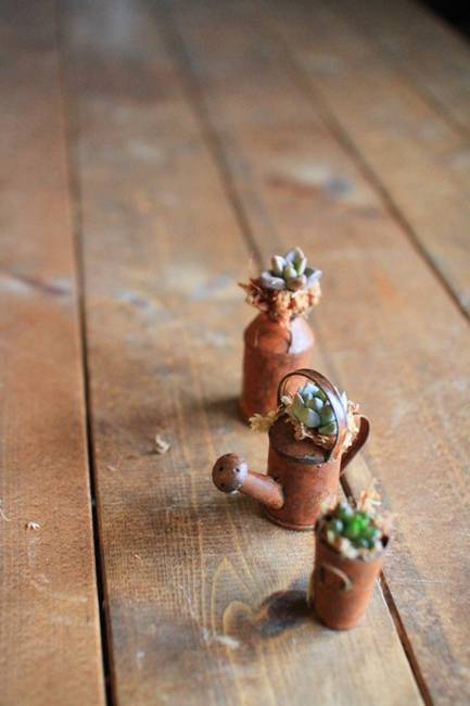 growing succulents for table decorations and centerpieces