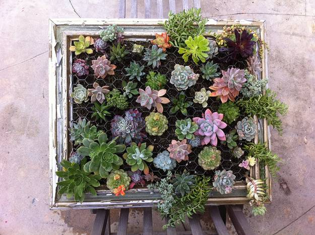 Creative Vertical Decorations With Succulents