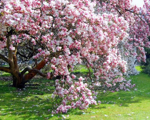 Gardens With Magnolia Trees 25 Healing Backyard Ideas To Feng Shui