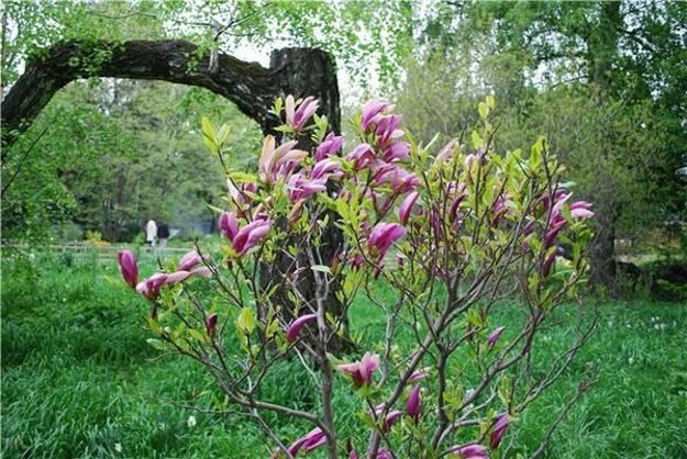 Gardens with Magnolia Trees, 25 Healing Backyard Ideas to Feng Shui ...