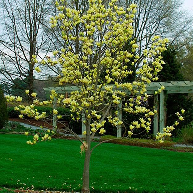 gardens with magnolia trees  25 healing backyard ideas to feng shui homes