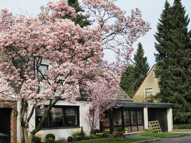 Gardens with magnolia trees 25 healing backyard ideas to feng shui white flowers garden design with magnolia tree mightylinksfo