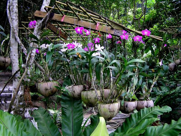 how to build an orchid garden