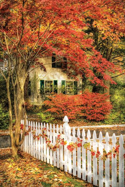 fall leaves and yard landscaping ideas, nature photography, fall landscapes